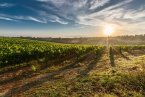 Top Fine Wines