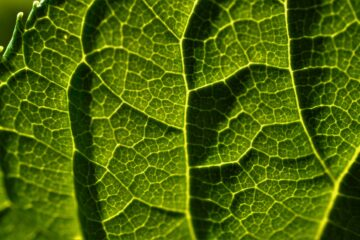 Why You Should Be Taking Liquid Chlorophyll