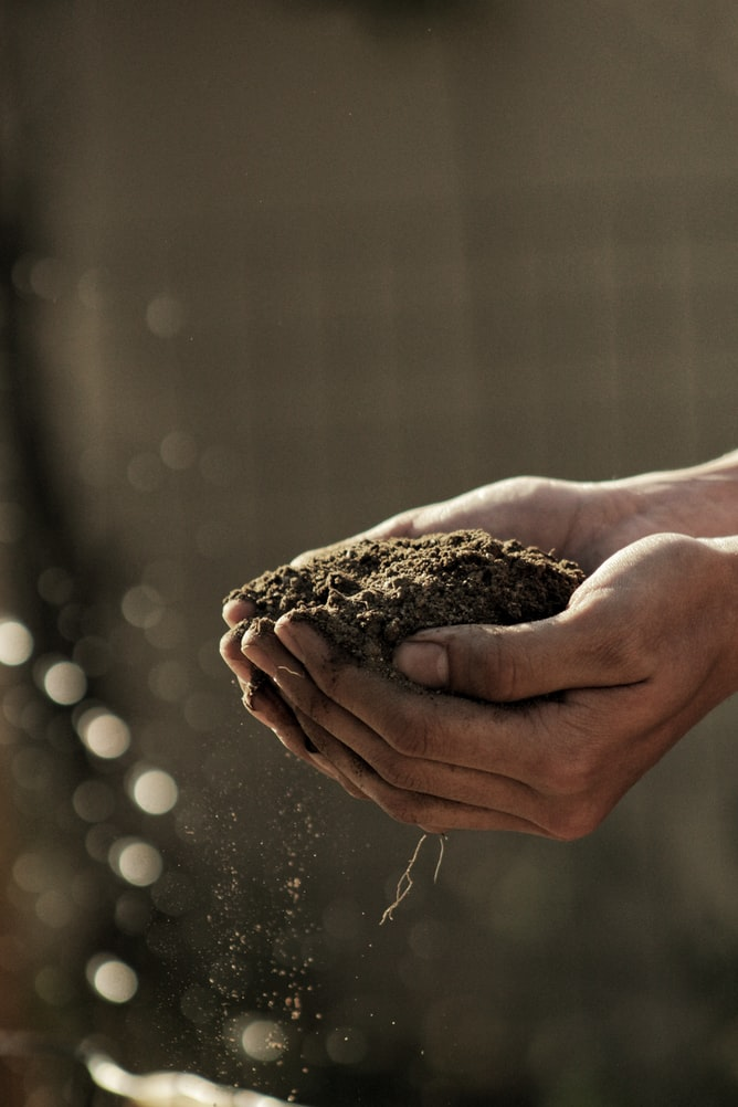 Why Gardening is a Must-Try Hobby for 2021