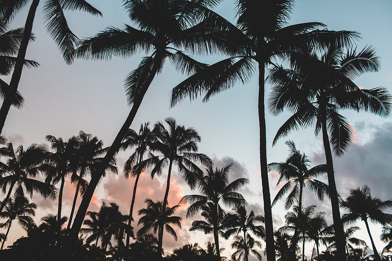 palm tree's with a blue and pink sunset background