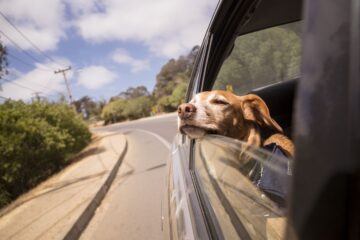 Tips For Travelling With A Pet